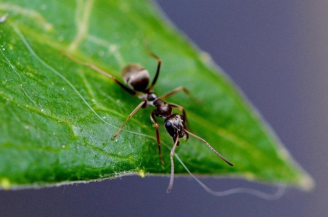 mravenec a list