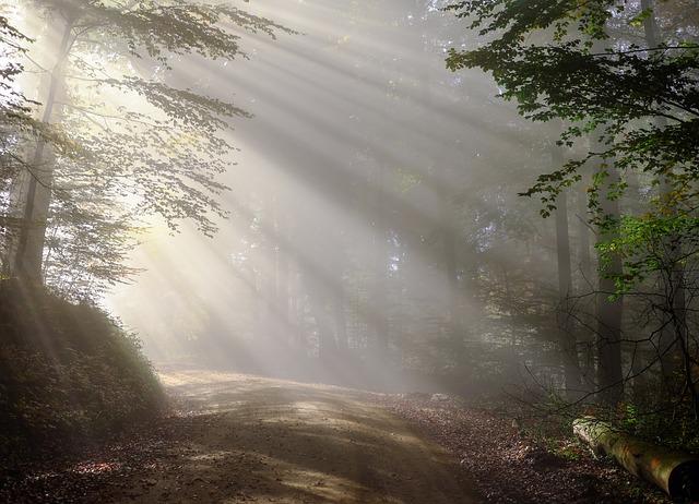 raní mlha