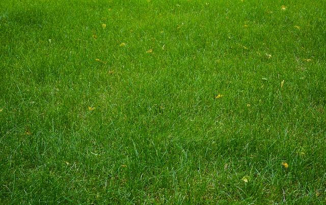 dlouhá tráva