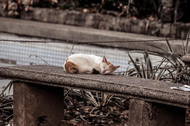 betonové zábradlí, spící kočka